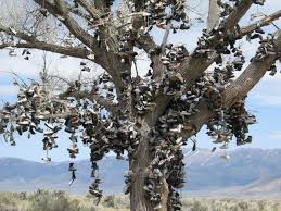 Nevada Shoe Tree