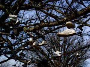 shoe-tree