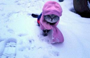 cat_cold_weather