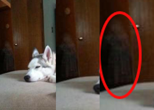 Can pets become ghosts?