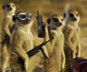 meerkat-mafia
