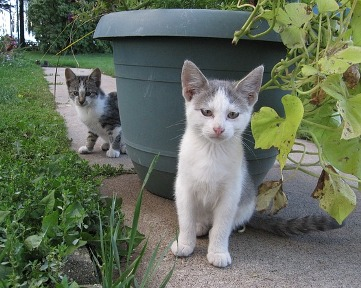Two cats in the yard